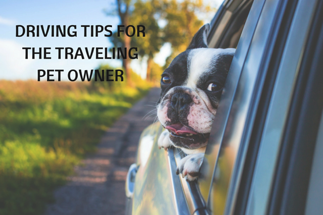 Driving Safety Tips for the Traveling Pet Owner